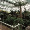Zielona Gora - palm house
